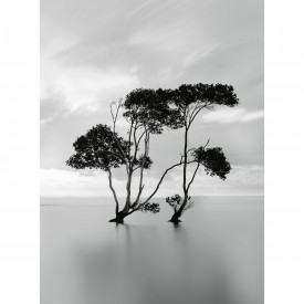 Papier peint panoramique Trees In The Still Water DD119077 A.S. Création Designwalls